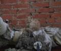 Кому-нибудь нужен бездомный котёнок Сидит на трубах за здан